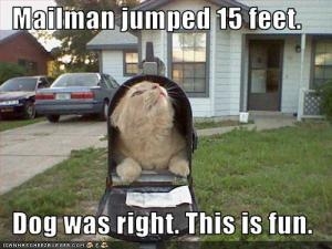 funny-cat-in-mail-box-meme